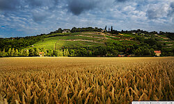 Saaletal Naumburg Landschaft