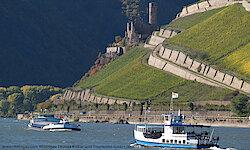 Rheingau5